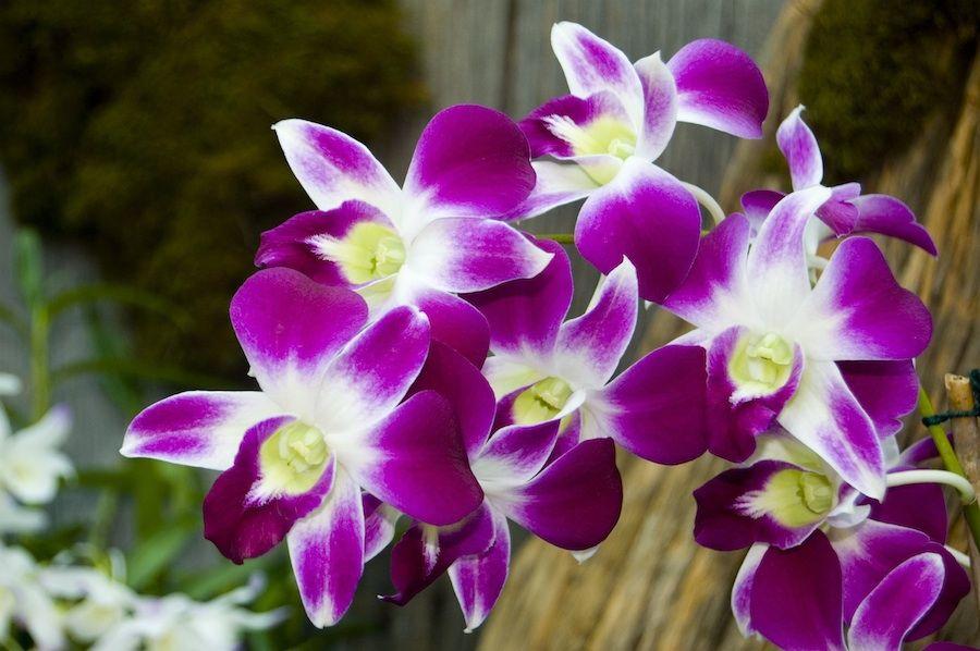 Feira de orquídeas acontece em shopping da zona Sul de Natal