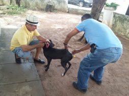 Natal inicia Campanha de Vacinação contra raiva em cães e gatos (2)