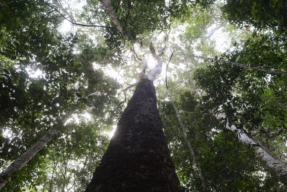 Rock in Rio lança projeto para plantar 1 milhão de árvores em Manaus