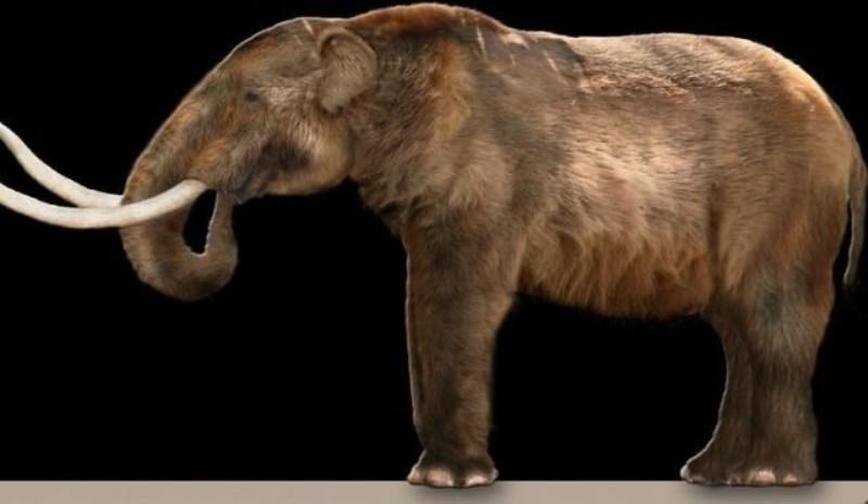 Fóssil de mastodonte é encontrado em Florânia/RN