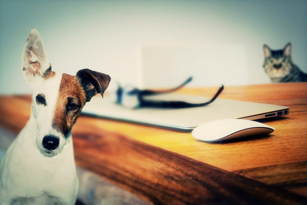 Natal recebe Feira de Adoção de Pets no próximo sábado (27)