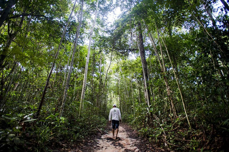 Terra abriga 60 mil espécies de árvores; Brasil tem maior número