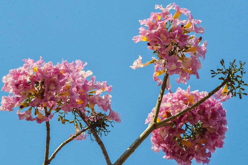 Primavera começa sob efeito do fenômeno La Niña, diz Emparn