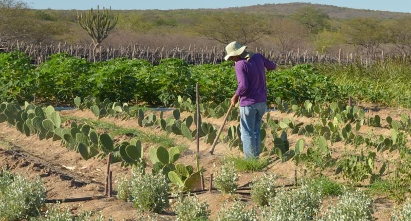 Sistema vai ajudar agricultor do semiárido nordestino a se preparar para seca