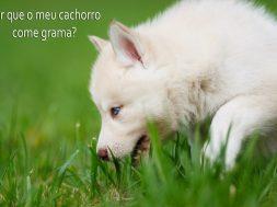 cachorro cão