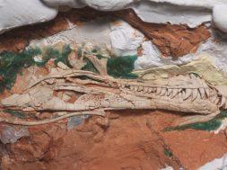 fossil_dino