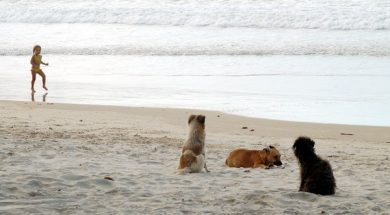 animais na praia