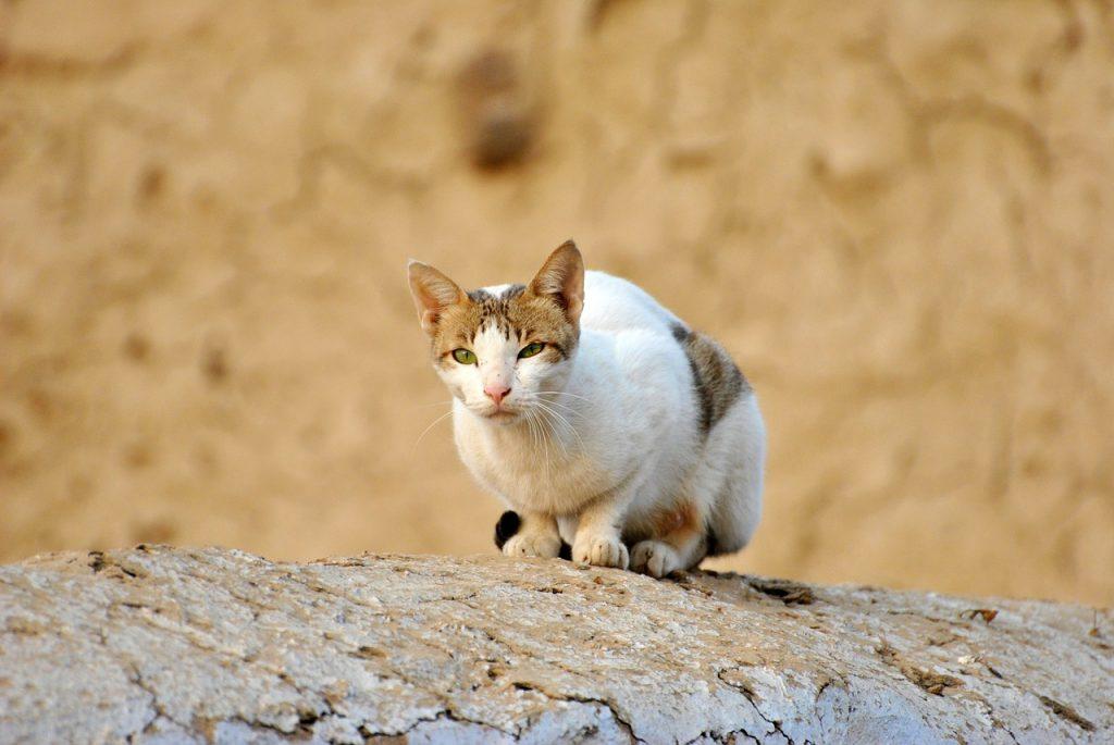Desaparecido há 2 anos, gato percorre 140 km e volta para casa