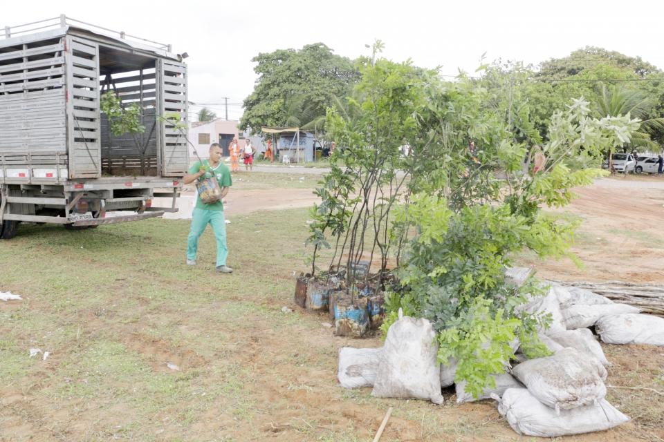 Arborizando Natal: prefeitura quer plantar 20 mil árvores até 2021