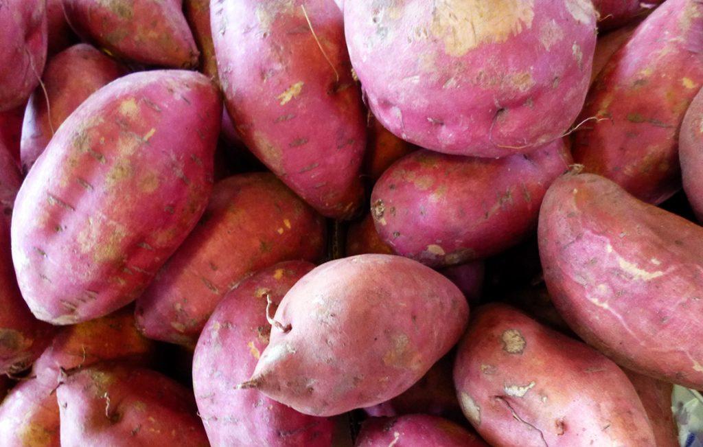 RN poderá produzir álcool a partir da batata doce