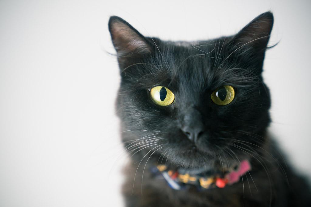 Discriminação racial atinge Pitbulls e gatos pretos