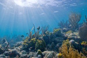corais no Santuário Marinho Nacional da Florida