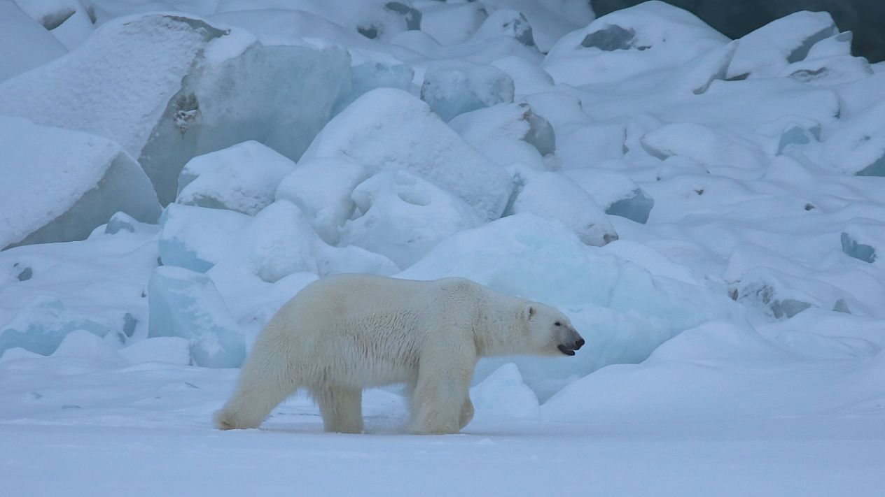 Biólogos alertam para futuro catastrófico da fauna marinha