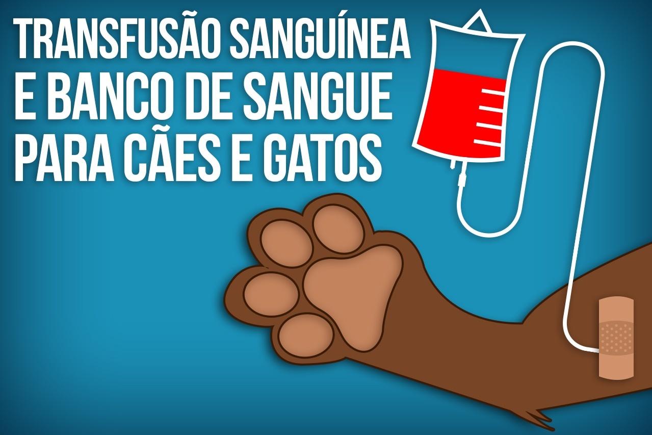 doação de sangue cachorro e gato