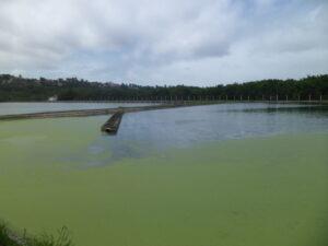 Caern está despejando esgoto sem tratamento no rio Potengi