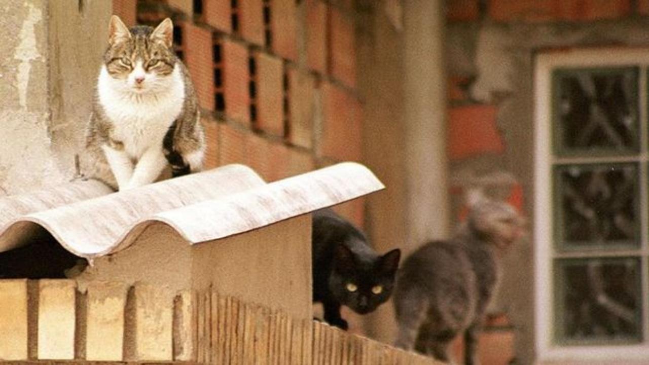 Parnamirim oferece serviço gratuito de castração de gatos