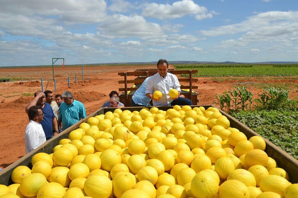 fruticultura frutas melão do rn