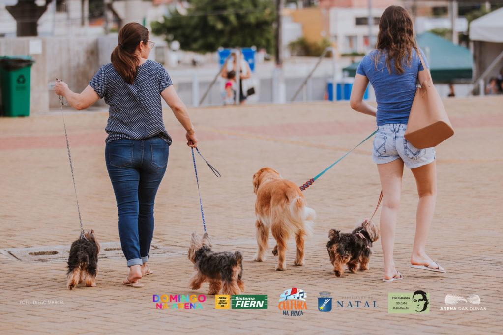 'Domingo na Arena' realiza feira de adoção de cães e gatos