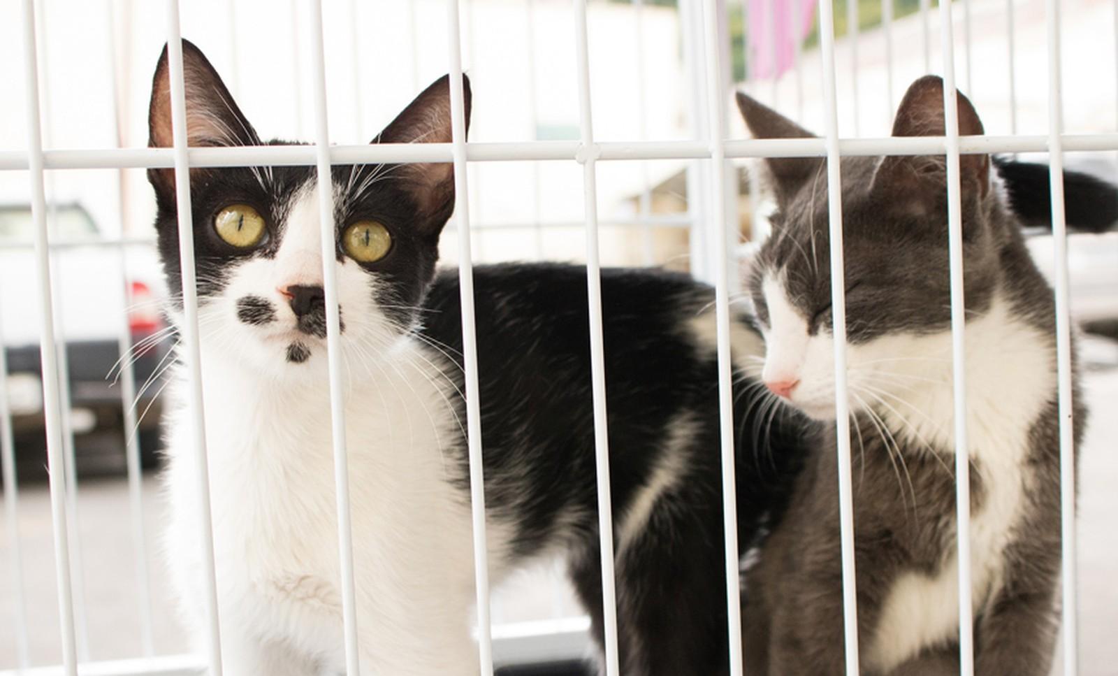 Prefeitura oferece castração gratuita de gatos em Natal