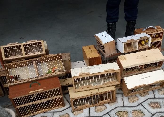 Guarda Municipal resgata tucanos e outras 97 aves na feira de Cidade da Esperança