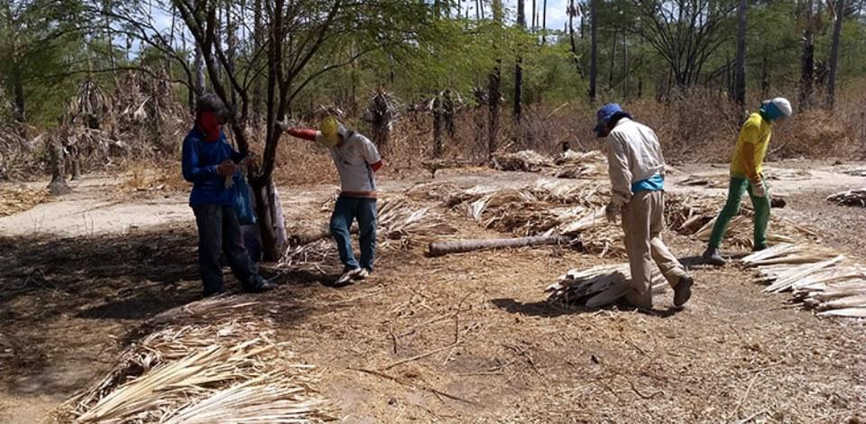 Operação resgata 25 trabalhadores no RN em situação análoga à escravidão