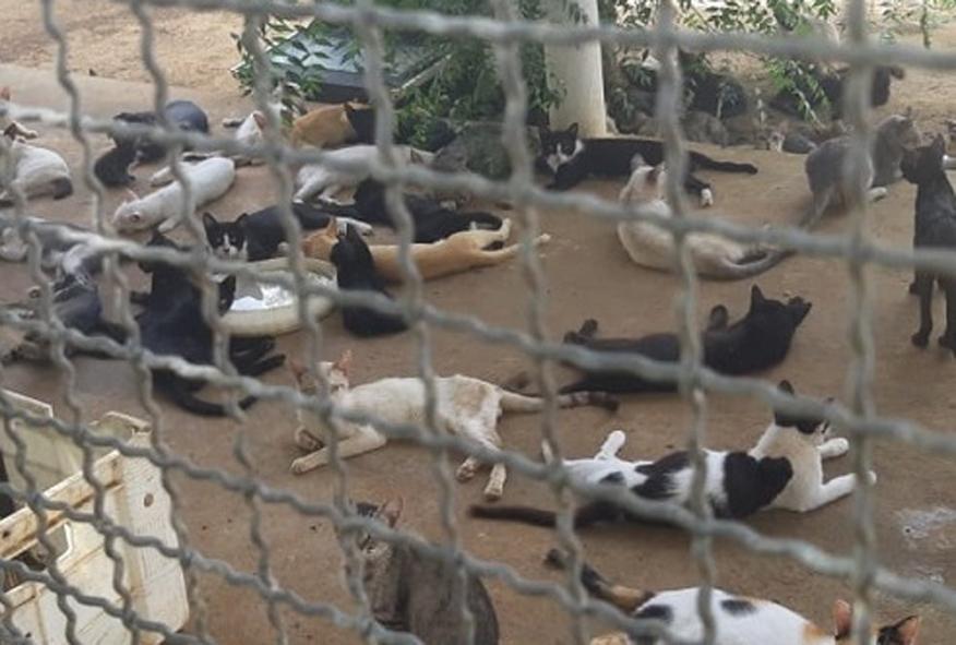 Polícia Civil descobre santuário de animais mortos e doentes em Apodi