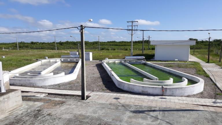 Pesquisa da UFRN desenvolve biocombustível produzido a partir de microalgas