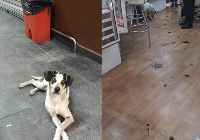 Cachorro morto em loja do Carrefour gera revolta nas redes sociais