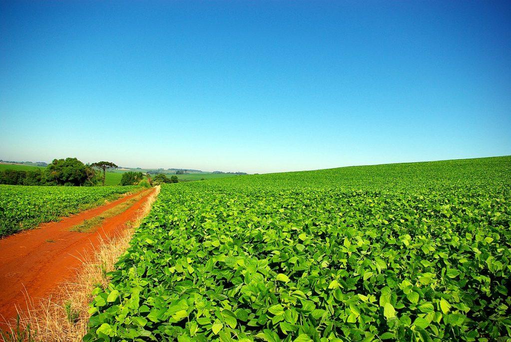 Conab estima que safra de grãos será de 238,4 milhões de toneladas