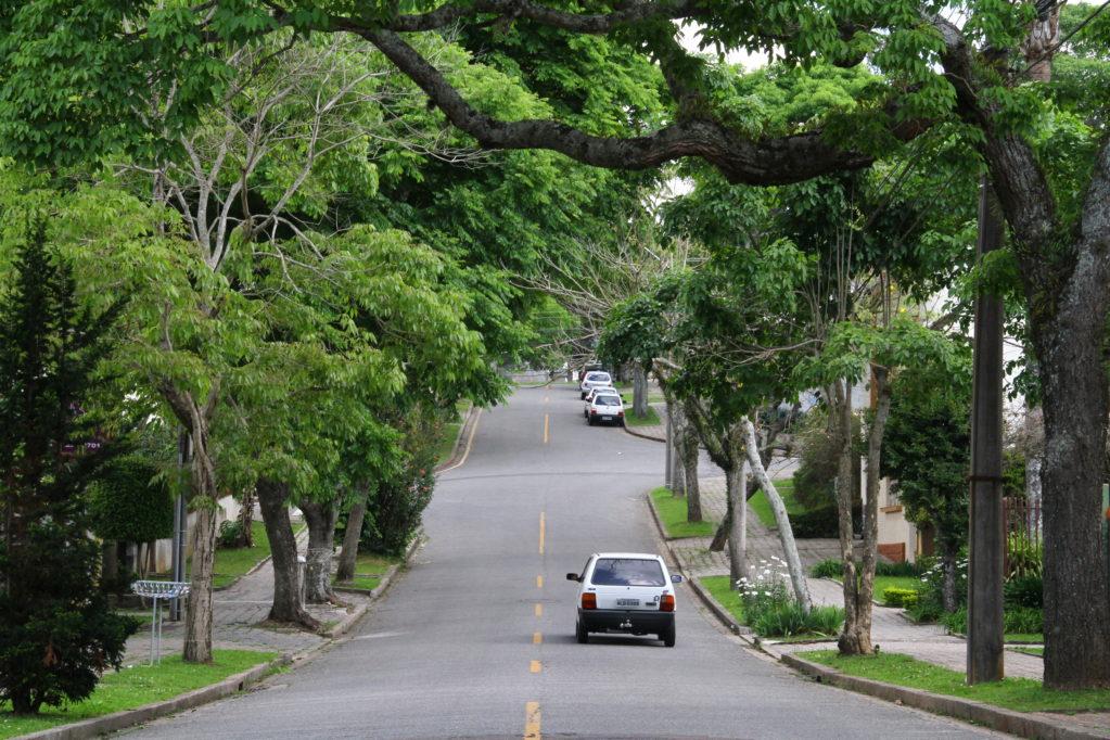 Natal vai receber o plantio de 20 mil novas árvores
