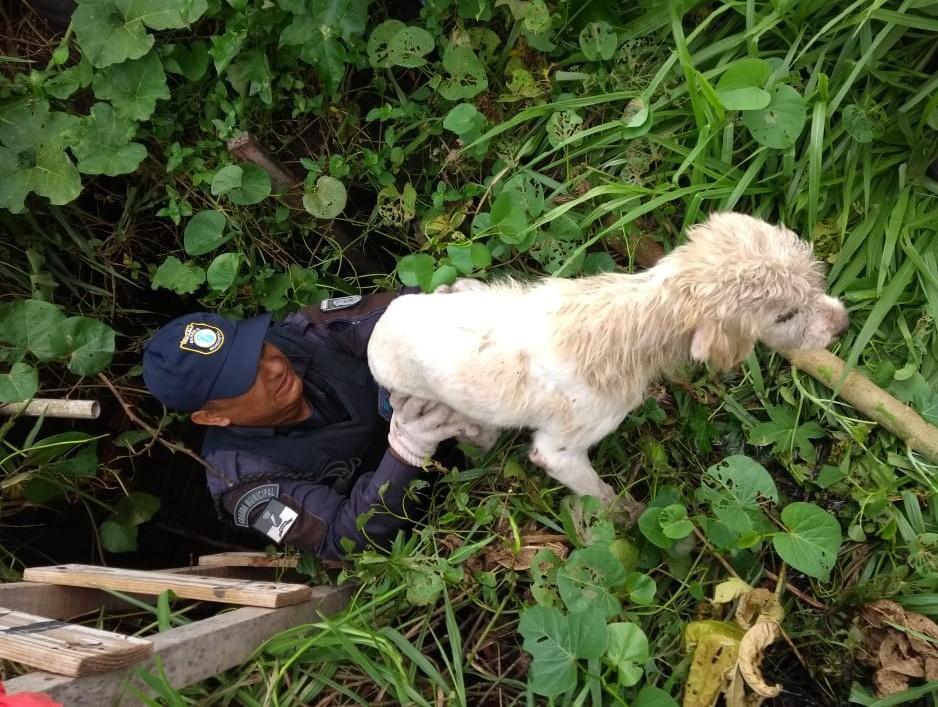 Guarda Municipal resgata cãozinho de dentro de sumidouro em Natal