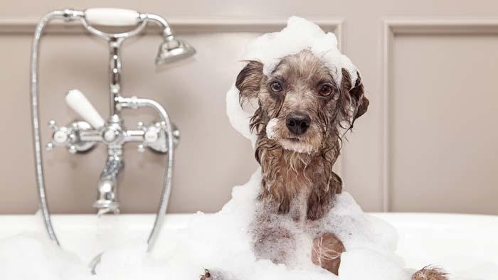 Produtos para animais de estimação podem causar alergias em donos e em seus pets, diz estudo
