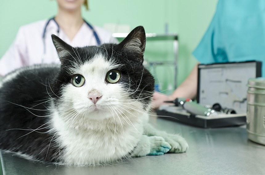 Projeto de Lei permite dedução de gastos veterinários do Imposto de Renda