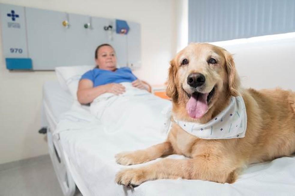 Projeto que permite visita de animais em hospitais é aprovado pela Câmara de Natal