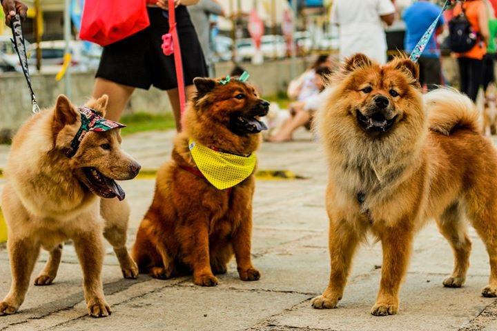 1ª 'Cão Silvestre' acontece em novembro na Arena das Dunas