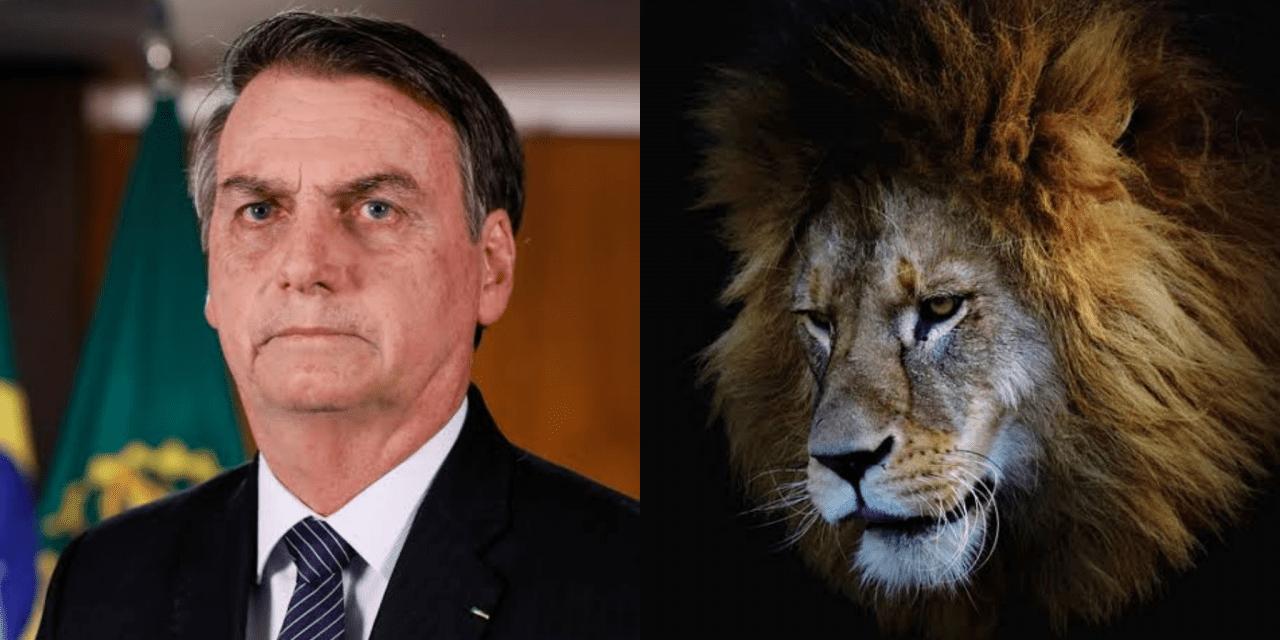 Bolsonaro pede desculpas ao STF por vídeo com hienas