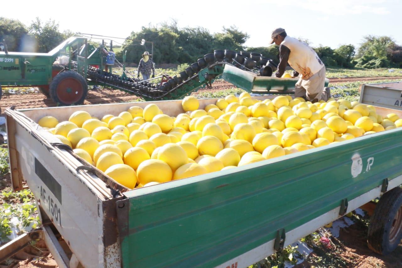 Fruticultura do RN conquista mercado chinês e deve gerar mais 10 mil empregos