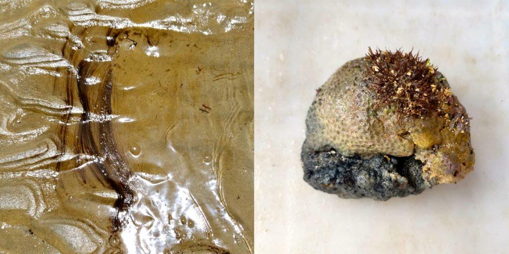 Pesquisadores identificam óleo nos parrachos de Pirangi