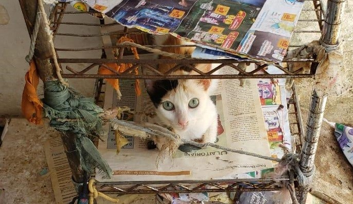 Polícia Civil resgata 48 gatos vítimas de maus-tratos no Alecrim
