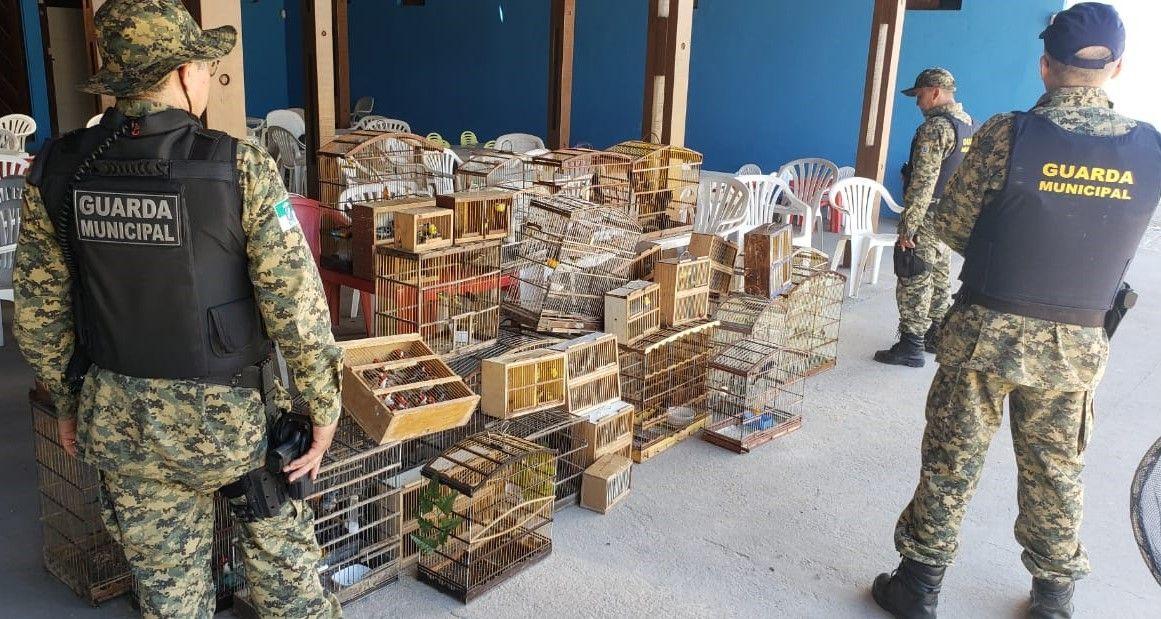 Guarda Municipal resgata 214 pássaros silvestres em feira livre de Natal