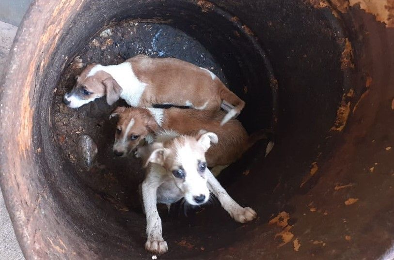 Guarda Municipal resgata filhotes de cães vítimas de maus tratos