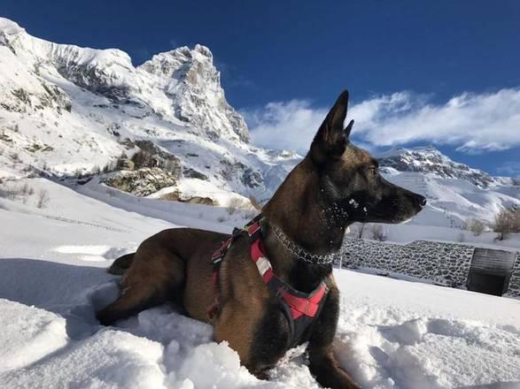 Cadela sobrevive 16 dias sem comida nos Alpes italianos