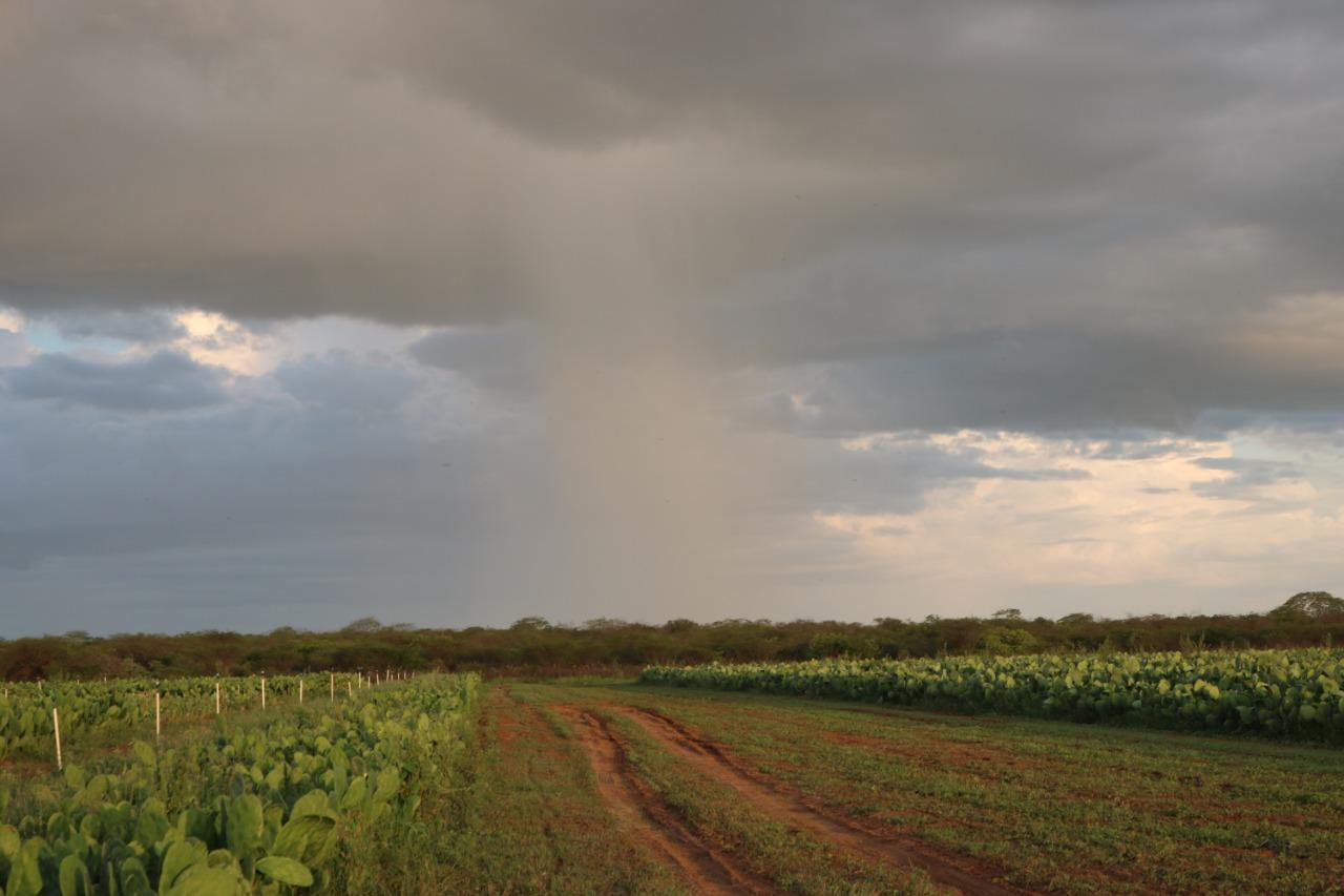 Previsão da Emparn: chuvas devem seguir até domingo no RN