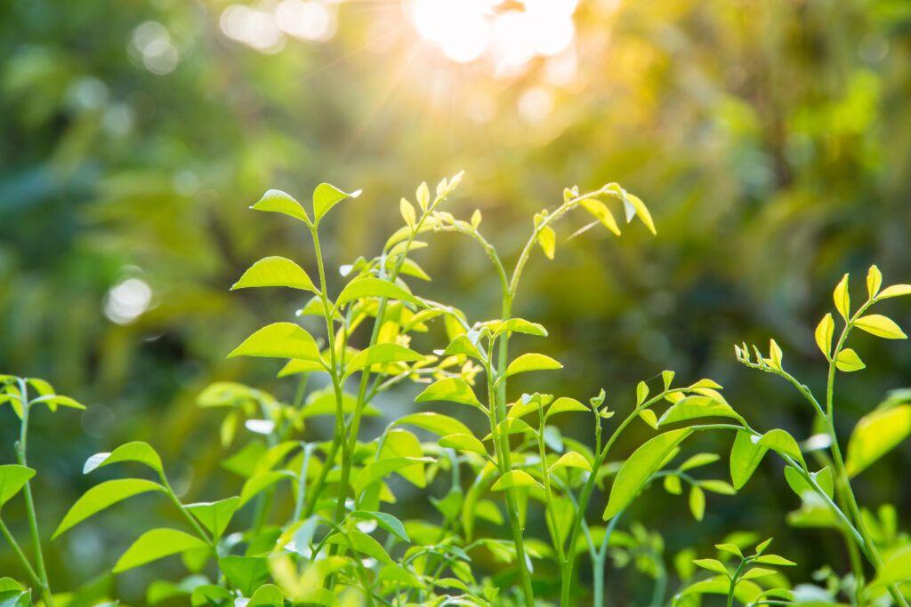 6 plantas que vão auxiliar você a combater problemas físicos e emocionais