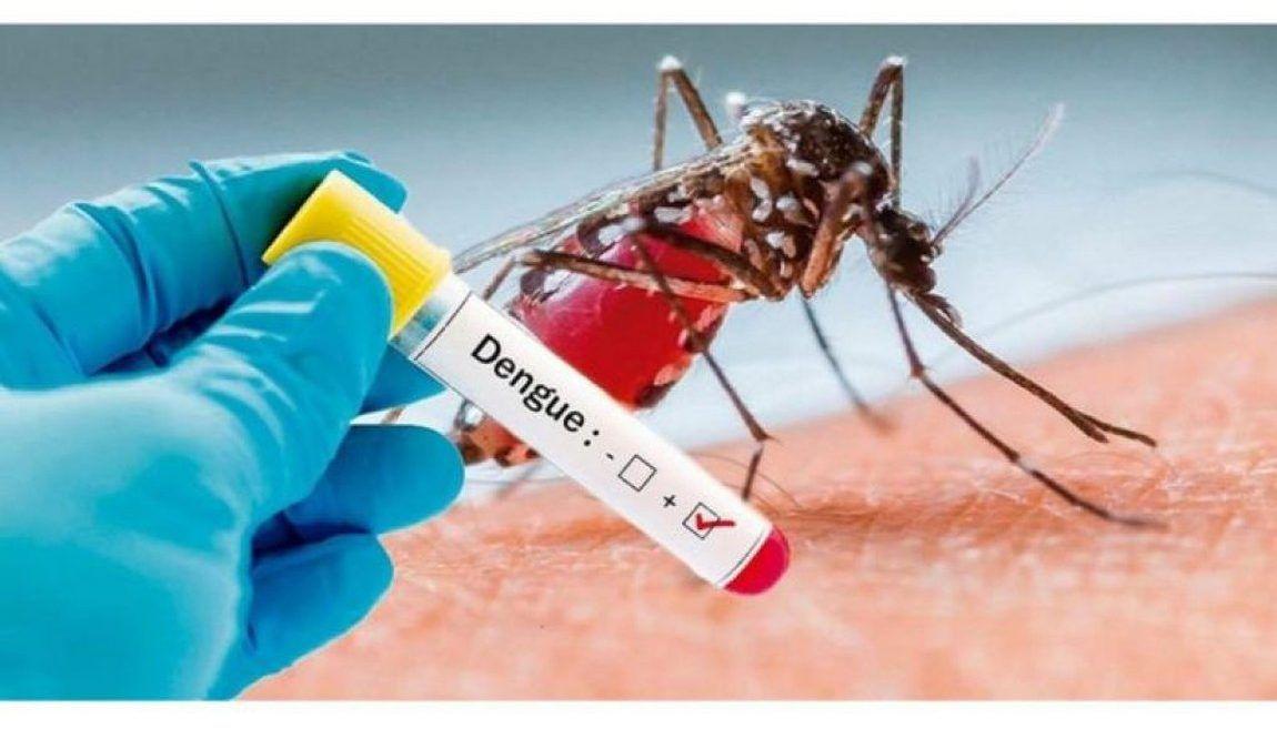 Ralos são potenciais criadouros do 'Aedes aegypti' dentro de casa
