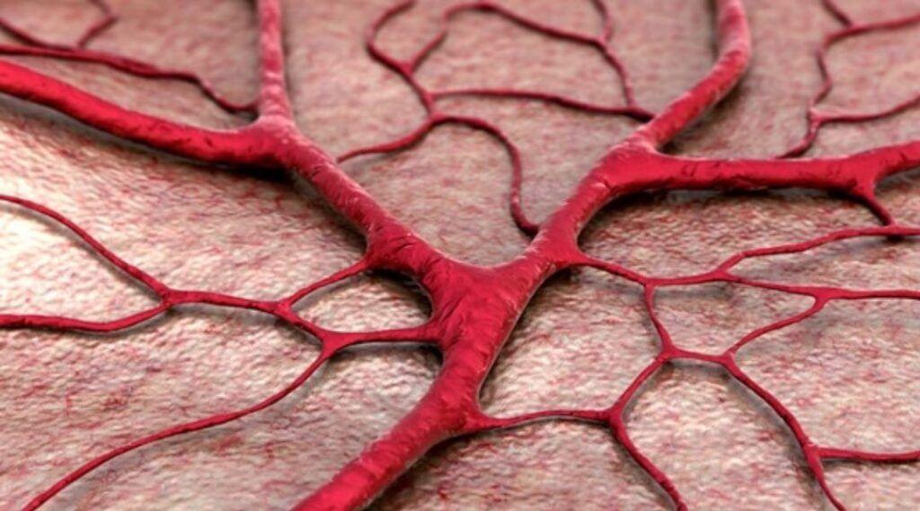 Vasos sanguíneos das mulheres envelhecem mais rapidamente que os dos homens