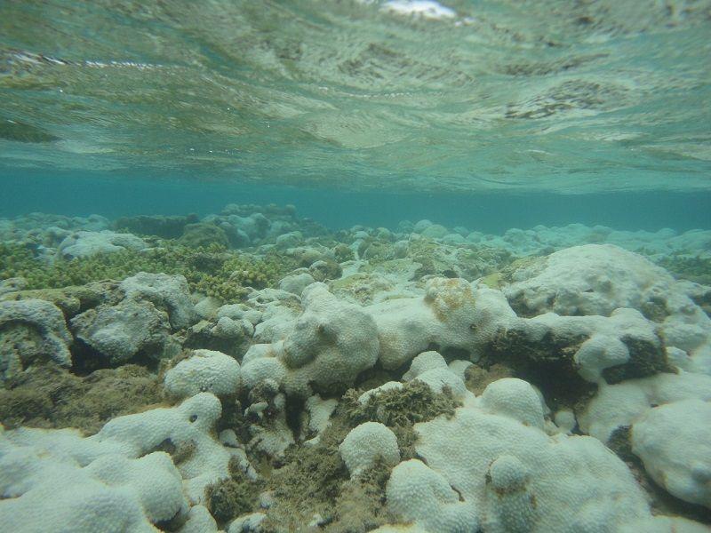 Branqueamento de corais no RN chama atenção e é um alerta para a sociedade