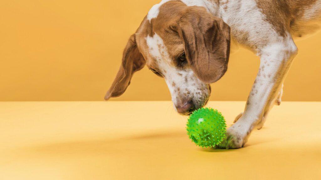 Pets na quarentena: saiba como mantê-los ativos e saudáveis sem descumprir as regras de afastamento social