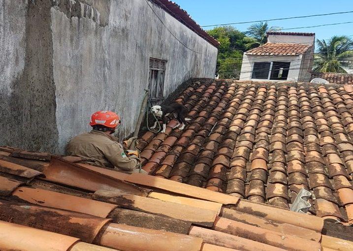 Bombeiros resgatam cadela presa em telhado de uma residência