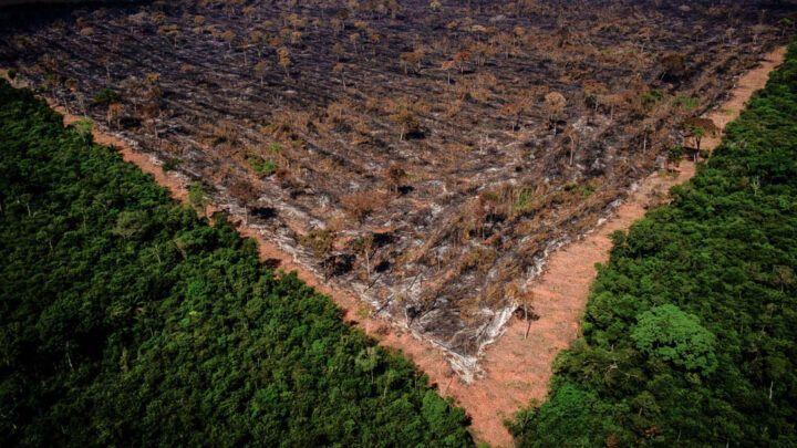 Desmatamento da Amazônia em abril é o maior em 10 anos